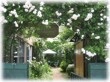 並木家のバラ.jpg